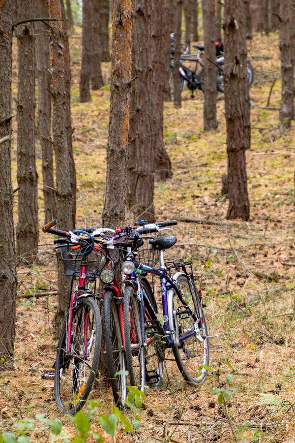 Cycling trip in the forest. Cycling trip the forest afternoon walk family wood brown green nature people stock photography