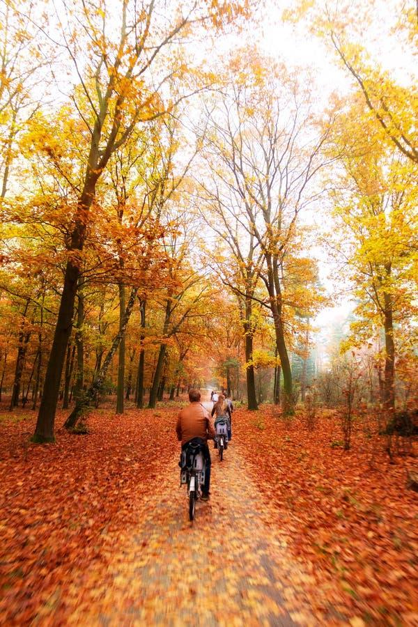 Veluwe autumn bicycle stock photo