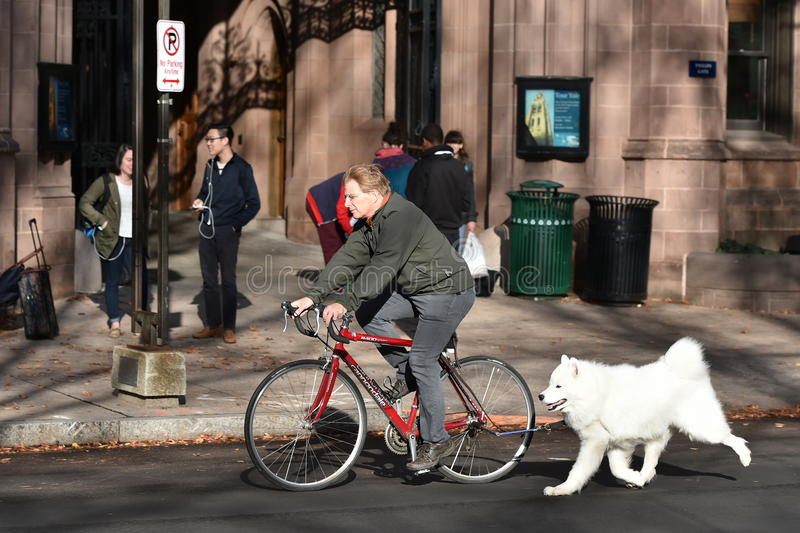 Cyclist with a Dog in Tow. A cyclist with a pet dog in tow rides along a city centre street on November 13, 2015 in New Haven, USA royalty free stock photography