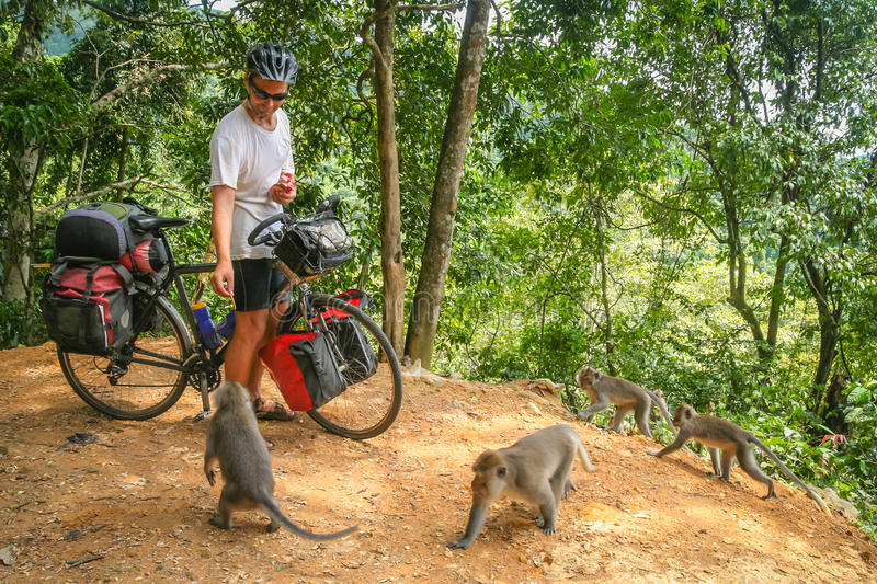 Cyclist feeding monkeys in Bali. Male cyclist feeding group of monkeys while on a cycle touring trip in Bali, Indonesia stock photo