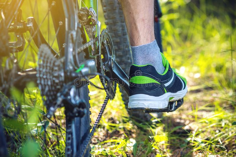 Cyclist on a green mountain bike in the woods riding on the grass. Bottom and back view. Active and extreme lifestyle royalty free stock image