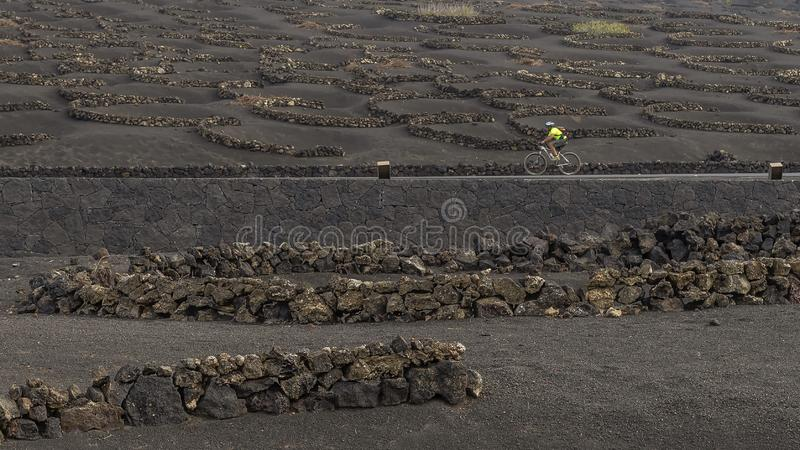 A cyclist travels the road through the vineyards on the volcanic soil of La Geria, Lanzarote, Canary Islands, Spain royalty free stock image