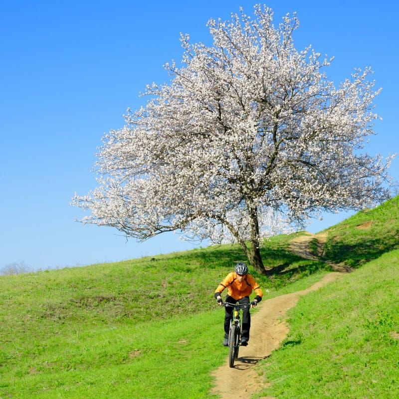Cycliste montant le vélo sur la colline verte avec le bel arbre photos libres de droits