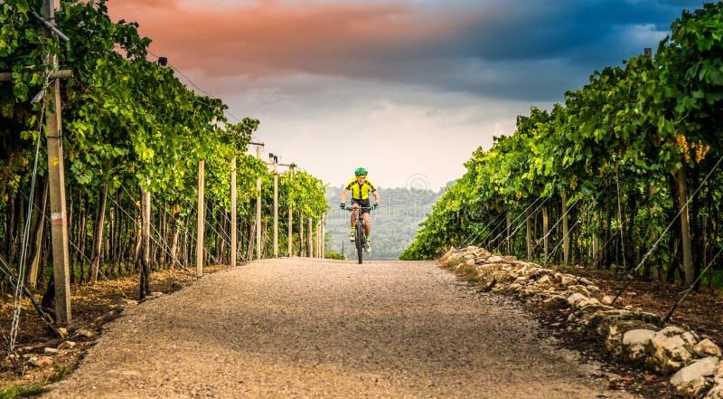 Cycliste pédalant par les collines photo libre de droits
