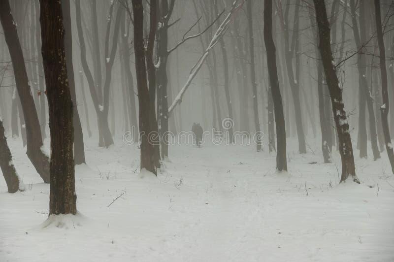 Cyclistes emballant dans la forêt brumeuse d'hiver photos libres de droits