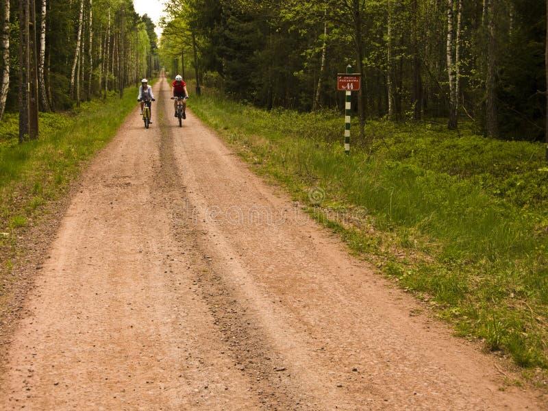 Cyclistes sur le chemin rouge de saleté dans la forêt photographie stock libre de droits