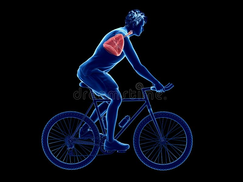 A cyclists lung. 3d rendered illustration of a cyclists lung stock illustration