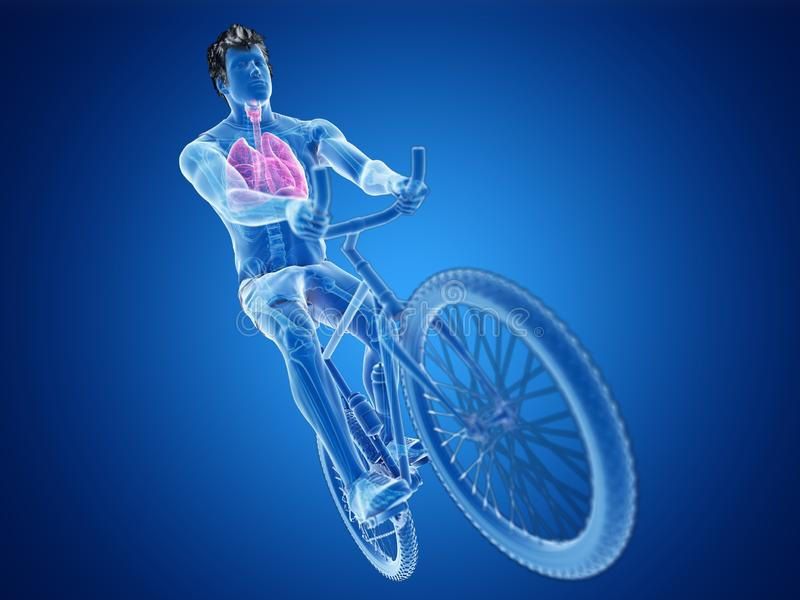 A cyclists lung. 3d rendered illustration of a cyclists lung royalty free illustration