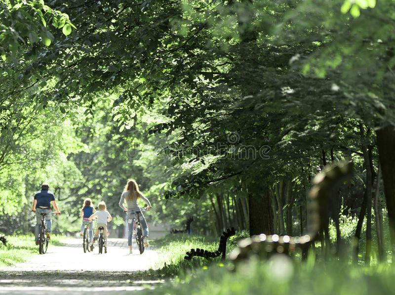 Cyclists on the road in the Park on a summer day royalty free stock photography