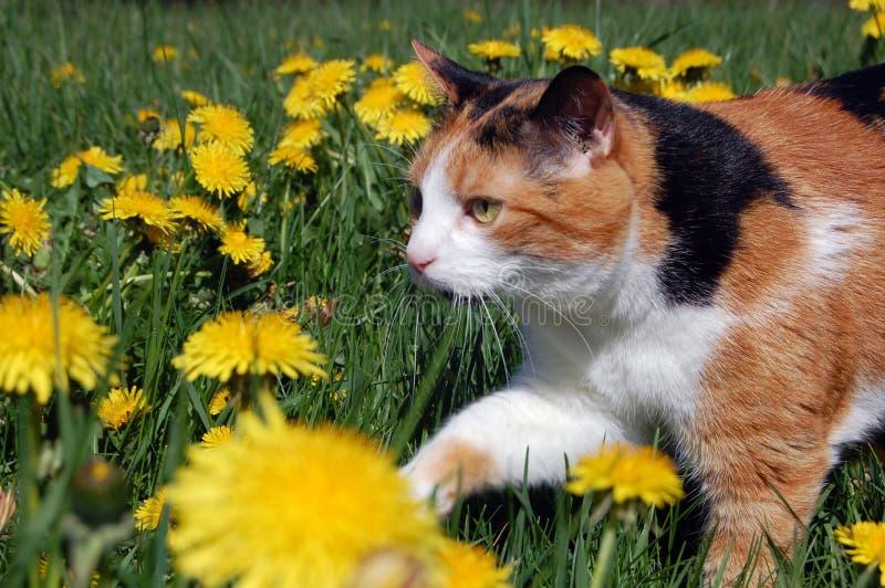 Cycowy Domowego kota Łowiecki Outside zdjęcie stock