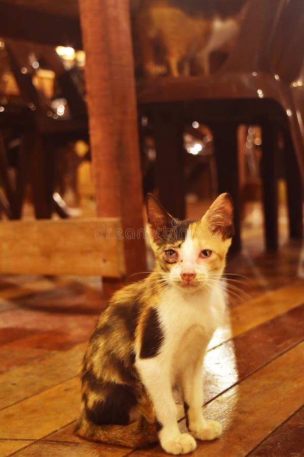 Cycowy kot gapi się przy kamerą emotionaly obrazy stock