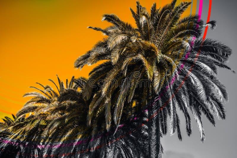 Cyfrowego kolaż z lat drzewkami palmowymi obraz royalty free