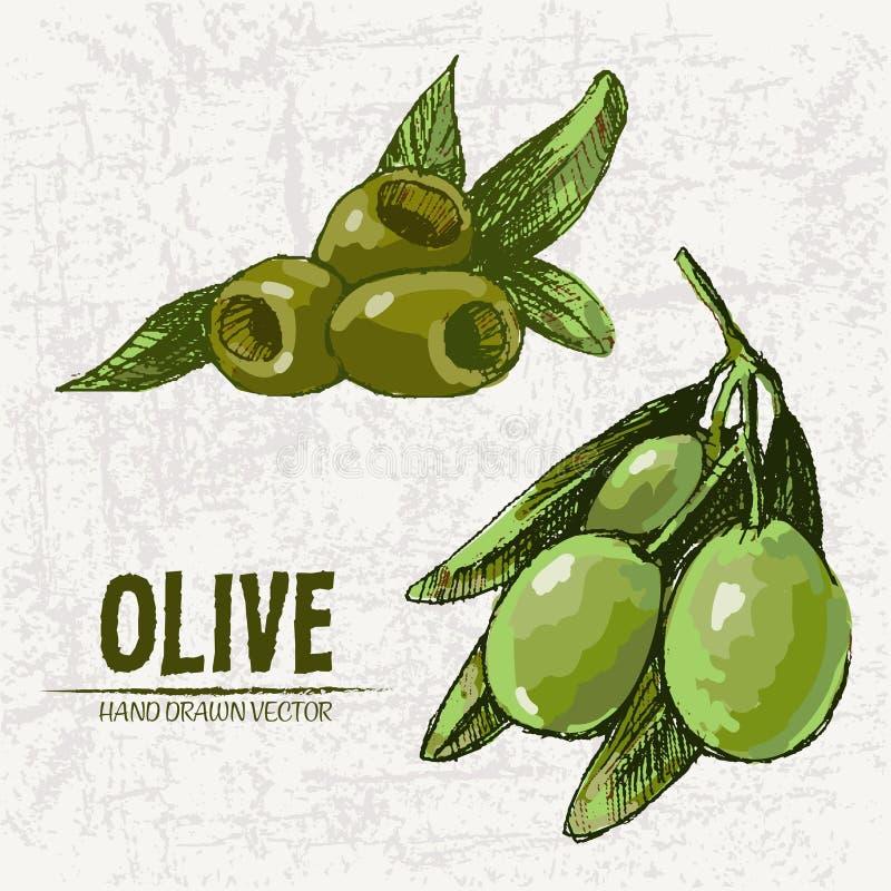 Cyfrowego koloru kreskowej sztuki szczegółowa świeża zieleń ilustracji
