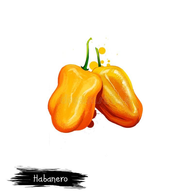 Cyfrowej ilustracja Habanero, Capsicum chinense pieprz odizolowywający na białym tle Organicznie zdrowy jedzenie ? ilustracja wektor