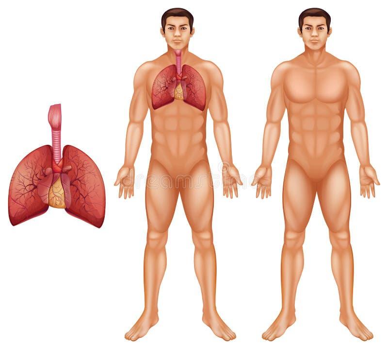 cyfrowy ludzki ilustracyjny oddechowy system ilustracja wektor