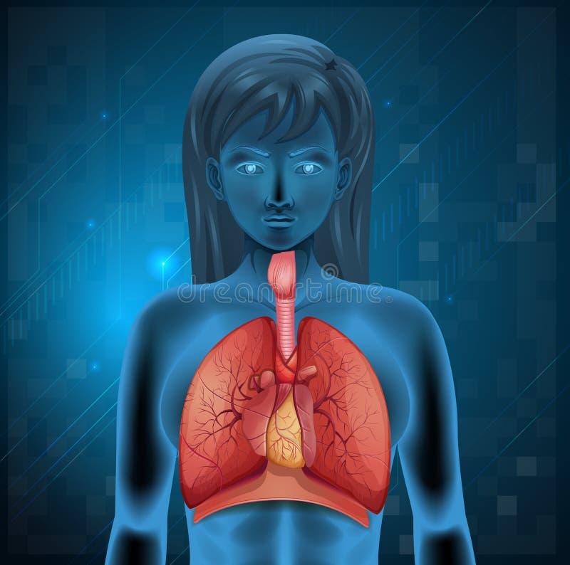 cyfrowy ludzki ilustracyjny oddechowy system royalty ilustracja