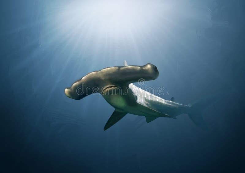 Hammerhead rekinu obraz ilustracji