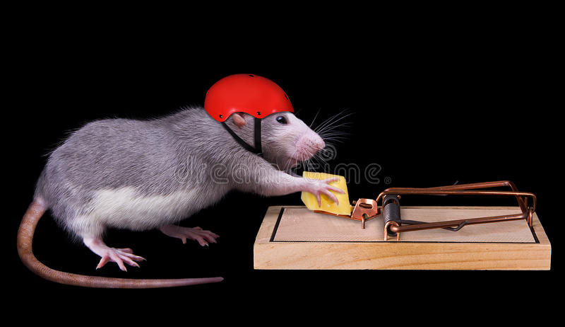 cyganienia śmierci szczur fotografia royalty free