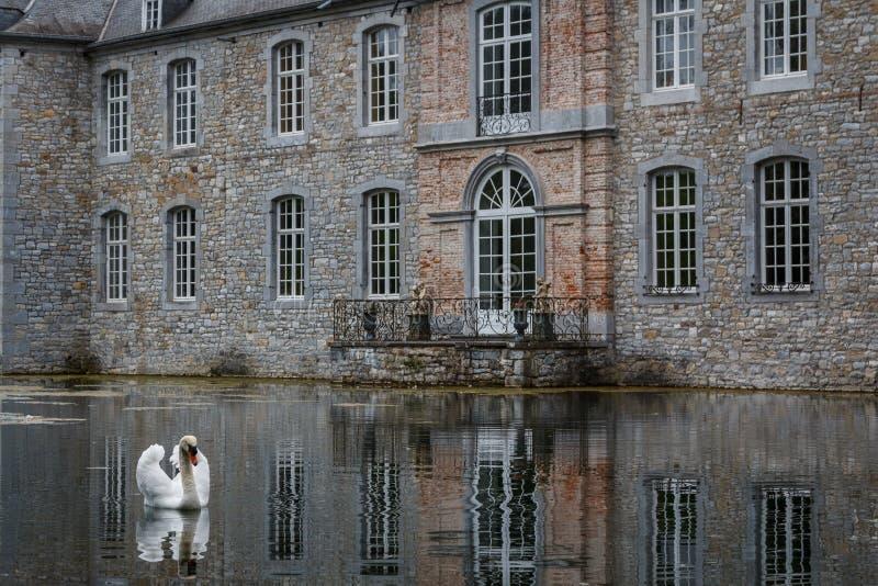 Cygne blanc devant le château d'Annevoie photo stock