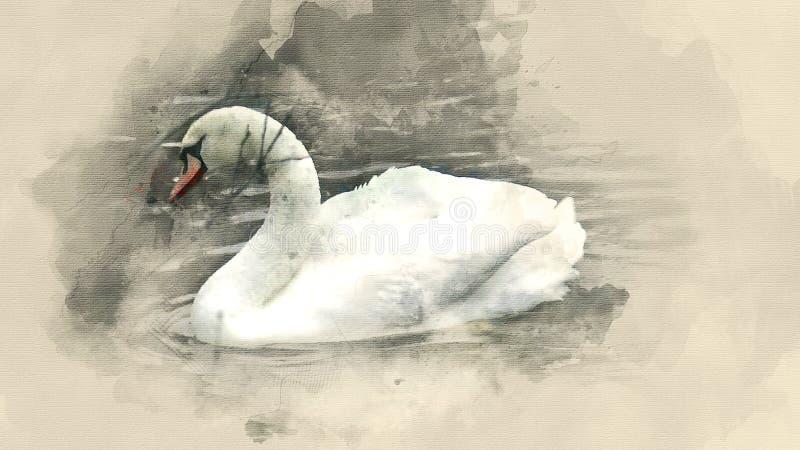 Cygne blanc sur un étang illustration de vecteur