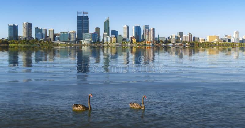 Cygne dans la rivière et la ville de Perth sur le fond photographie stock libre de droits
