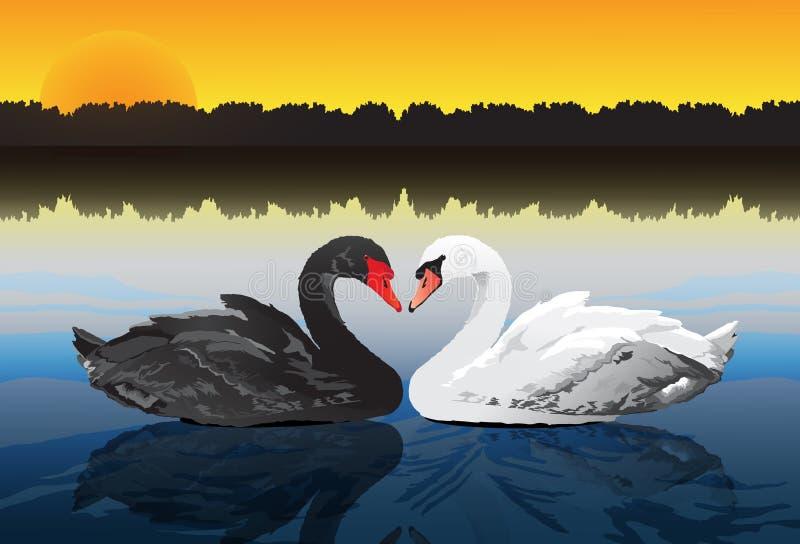 Cygne de couples au lac paisible illustration libre de droits
