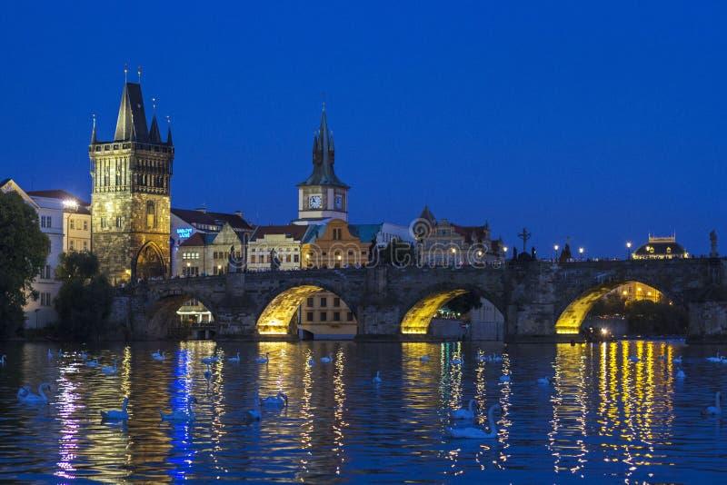 Cygnes de Prague photo stock
