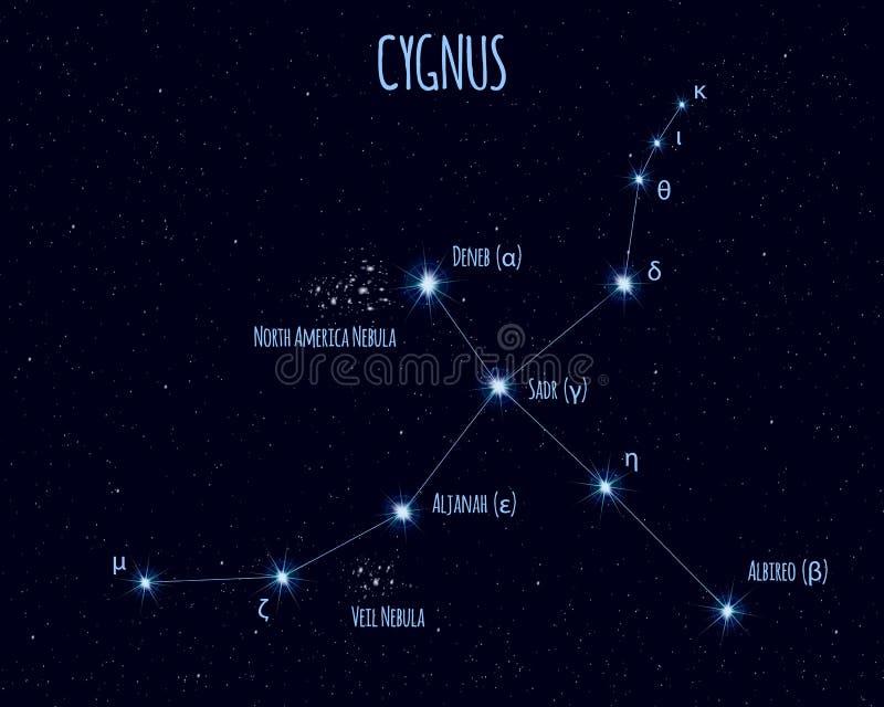 Cygnus gwiazdozbiór, wektorowa ilustracja z imionami podstawowe gwiazdy ilustracji
