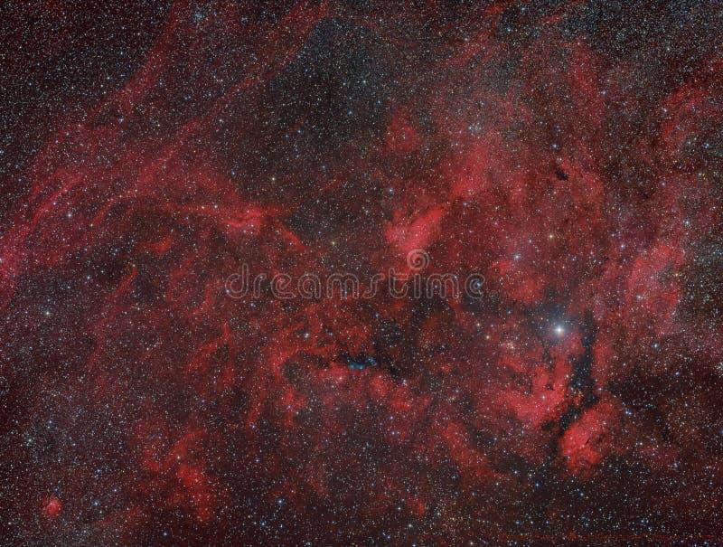 Cygnus Widefleld immagine stock