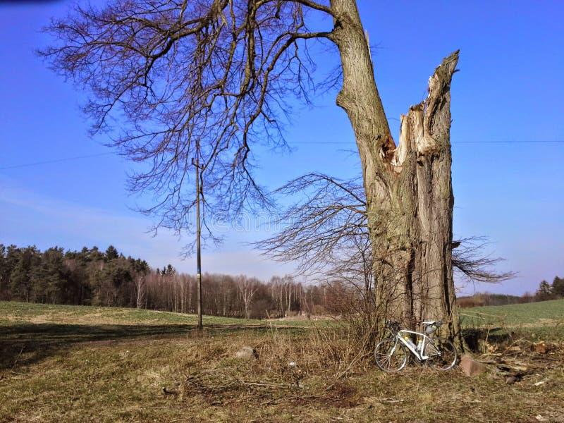 Cykel bredvid stort skadat träd arkivfoto