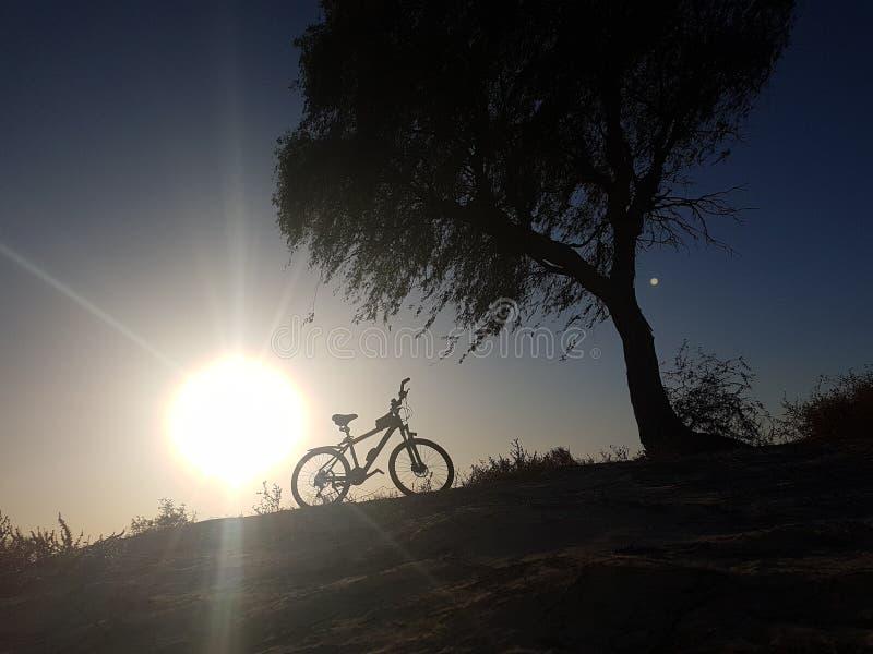 Cykel i öknen bredvid ett träd fotografering för bildbyråer