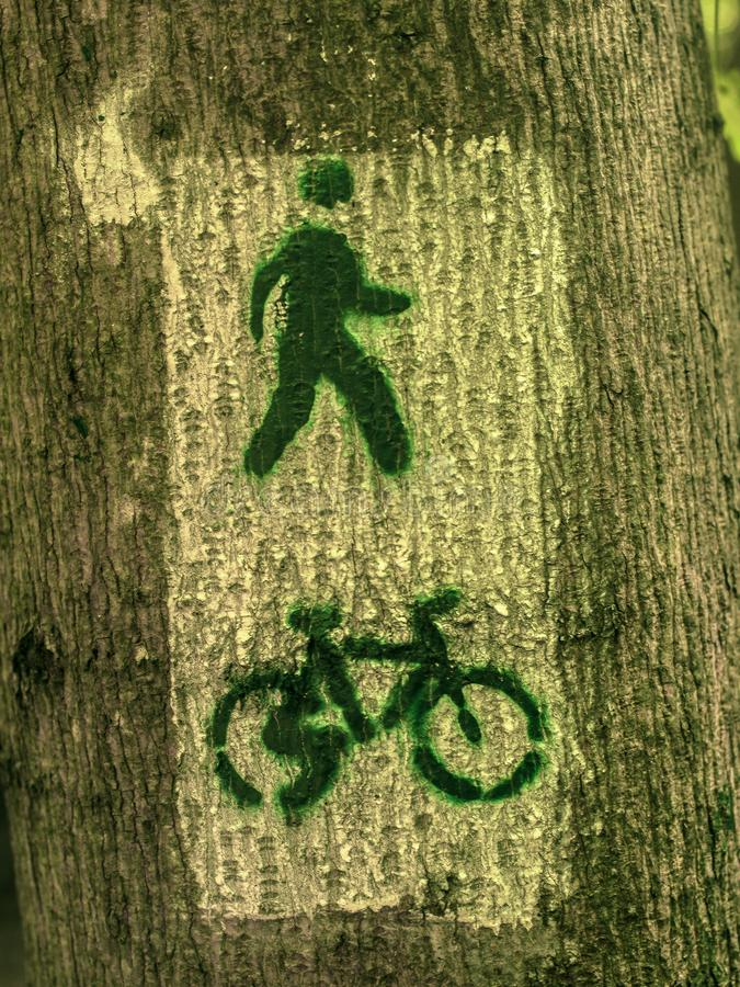 Cykelbana som målas med målarfärg på ett träd arkivbilder