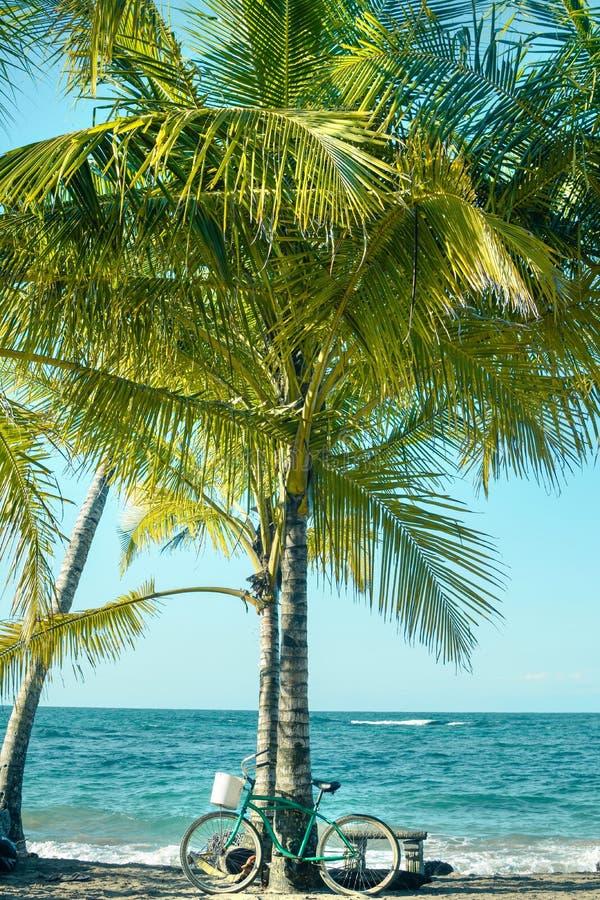 Cykelbenägenhet på en palmträd arkivfoto