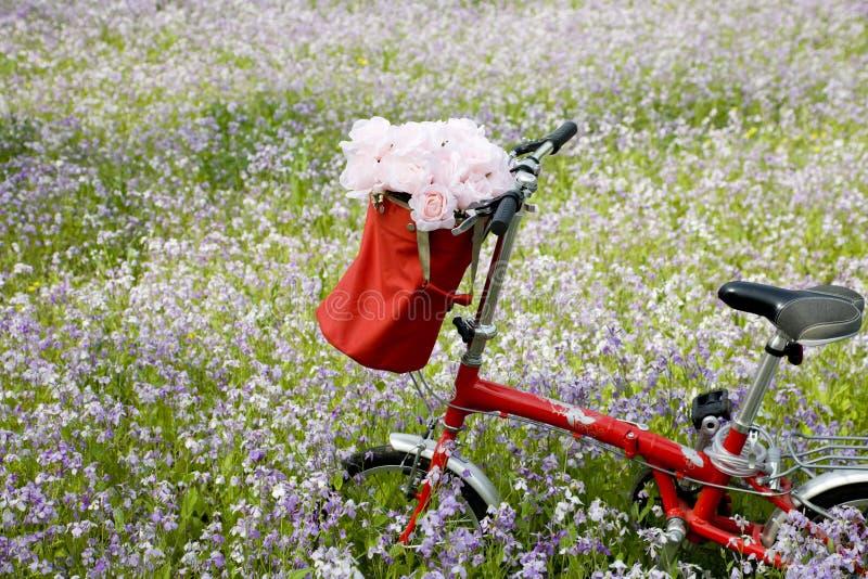cykelblommor royaltyfria foton