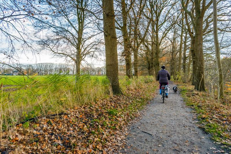 Cykla hunden royaltyfria bilder