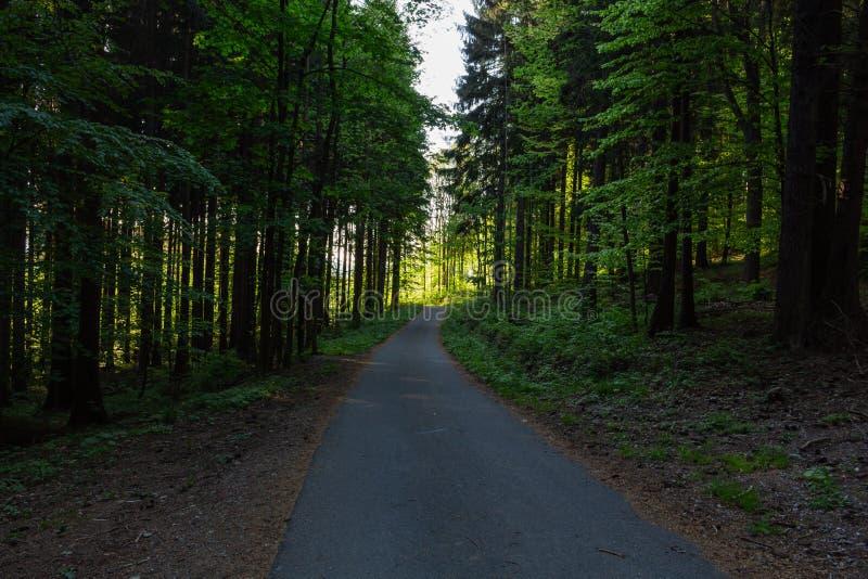 Cykla i naturskog på en regnig dag Väg i skognatur Grön skogväg Natur Väg Naturlig miljö royaltyfria bilder