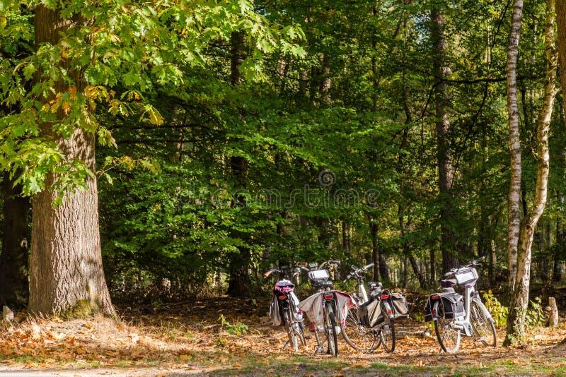 Cykla n i nationalparkNederländerna arkivfoto