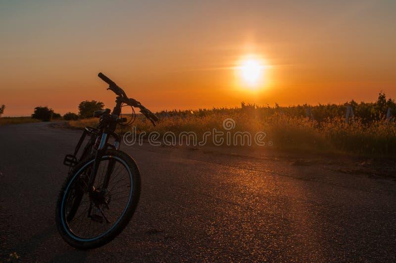 Cykla på bakgrunden av en väg och en solnedgång i bakgrundsvingården royaltyfri bild