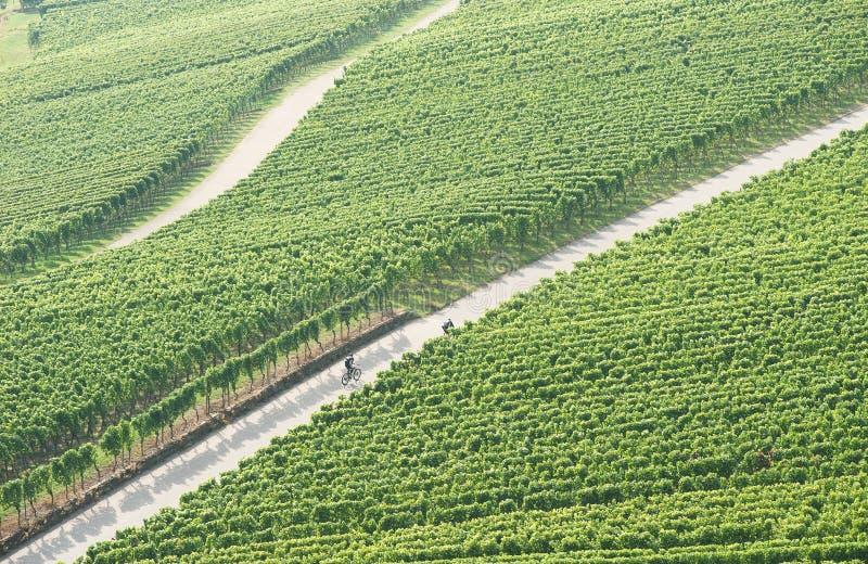 cykla vingård royaltyfri bild