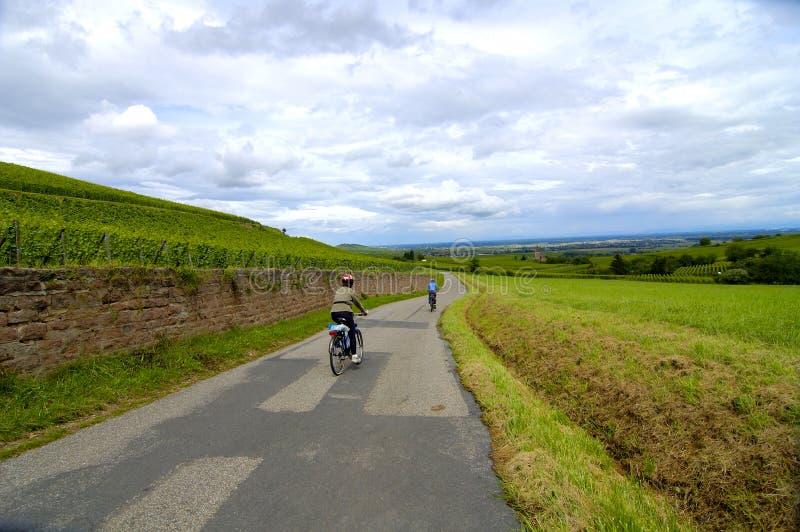 cykla vingårdar royaltyfri bild
