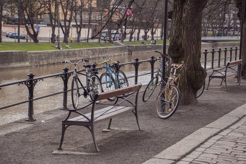 Cyklar på parkera vid flodbanken royaltyfri foto