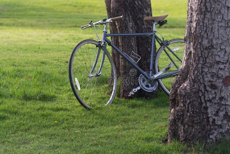 Cyklar under ett träd arkivbilder