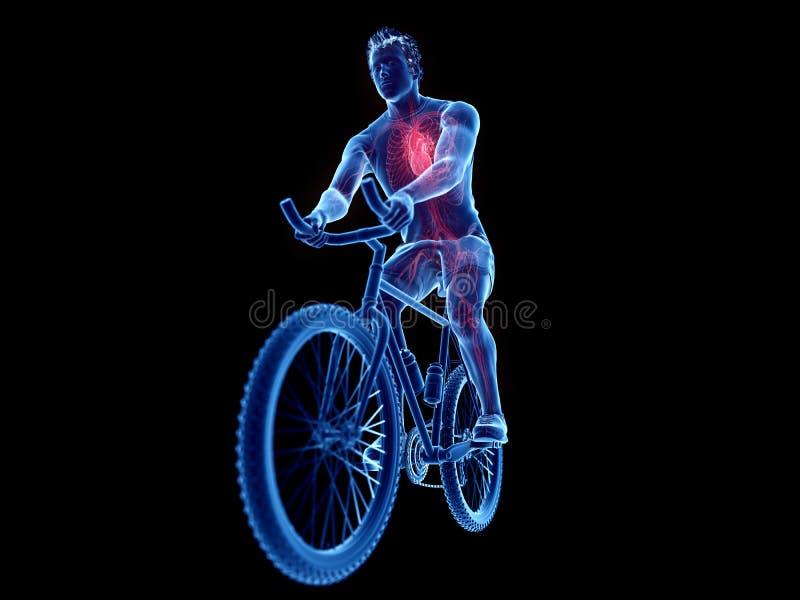 cykliści kierowi ilustracji
