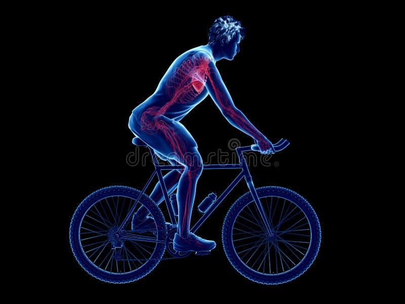 cykliści kierowi ilustracja wektor