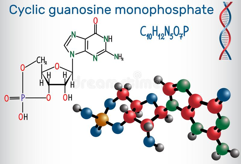 Cyklisk molekyl för guanosinemonophosphatecGMP Det är en nucleot royaltyfri illustrationer