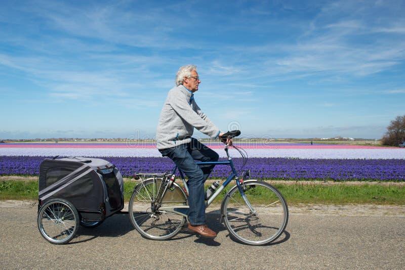 Cyklist i Holland royaltyfria bilder