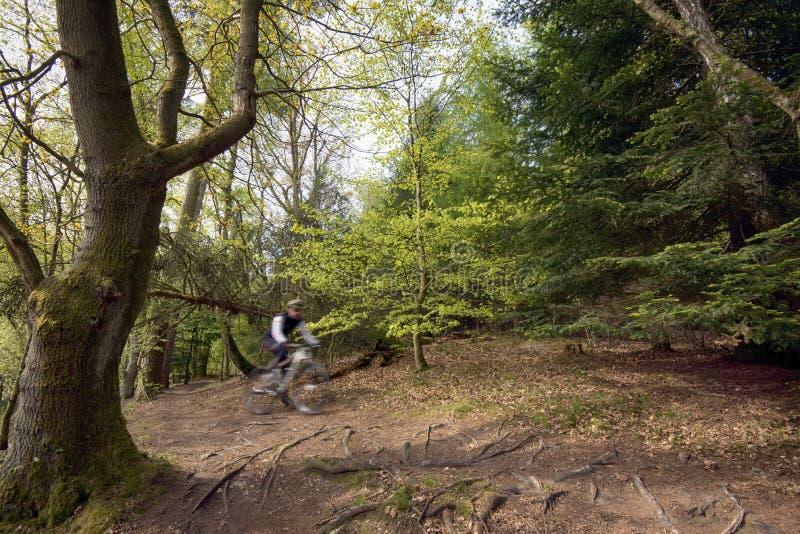 Cyklist i skog arkivfoto