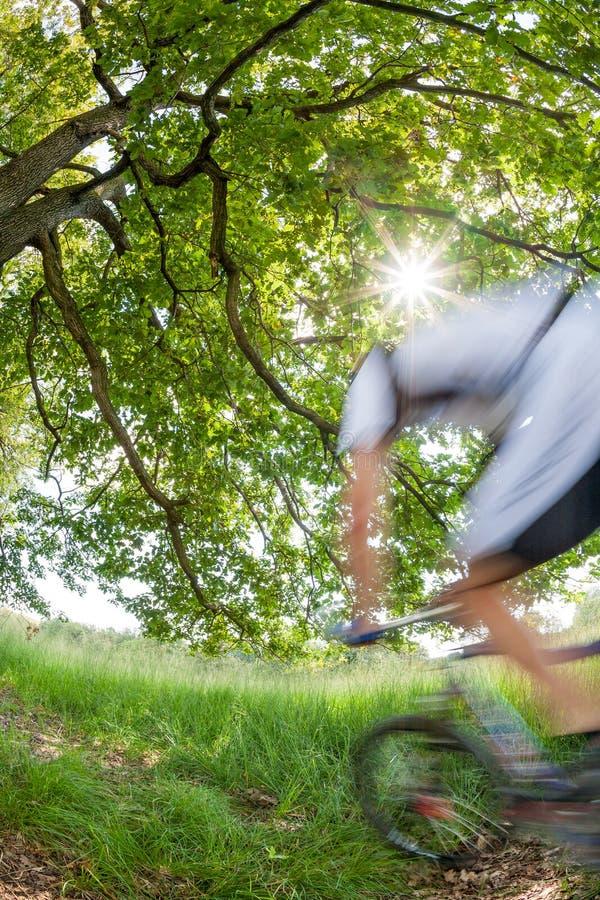 Cyklista jedzie rower w lesie w zamazanym ruchu obraz stock