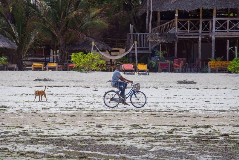 Cyklista na plaży z jego psem Podróż wokoło Zanzibar zdjęcie stock