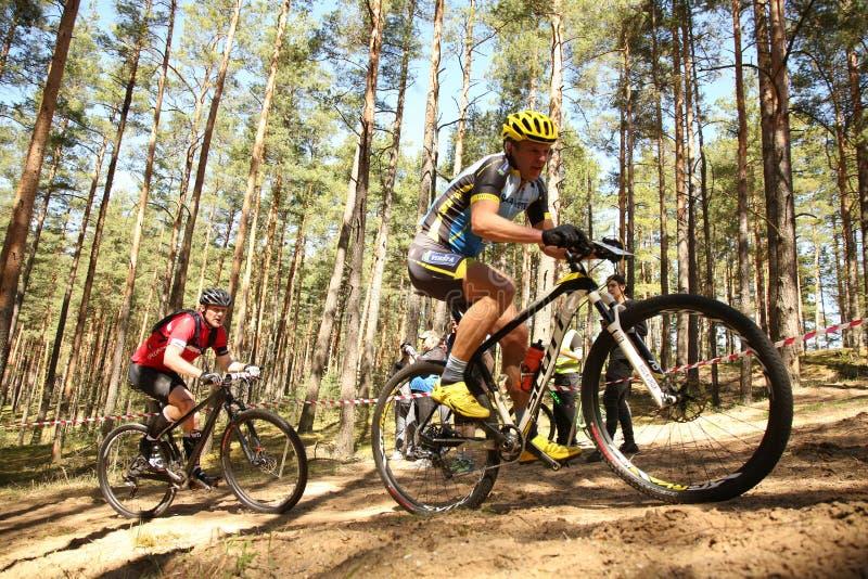 Cyklista współzawodniczy w elita MTB rasie przy lasem zdjęcie stock